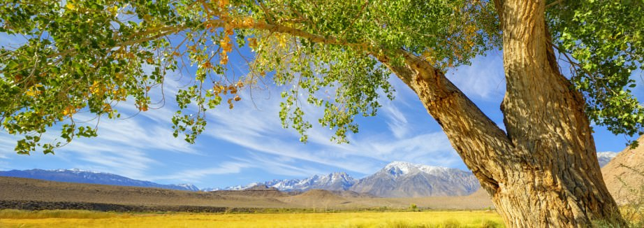 Majestic Tree Frames A Picturesque Scenic of the Sierra Nevadas